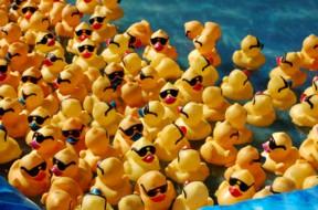 ducky2012