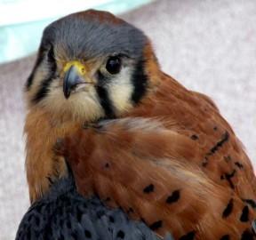 eve122012_babyhawk