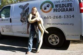 Stacy Gunderson tries on a new wraparound accessory — Irma the Burmese python, a star of Animal Tracks' wildlife presentations.