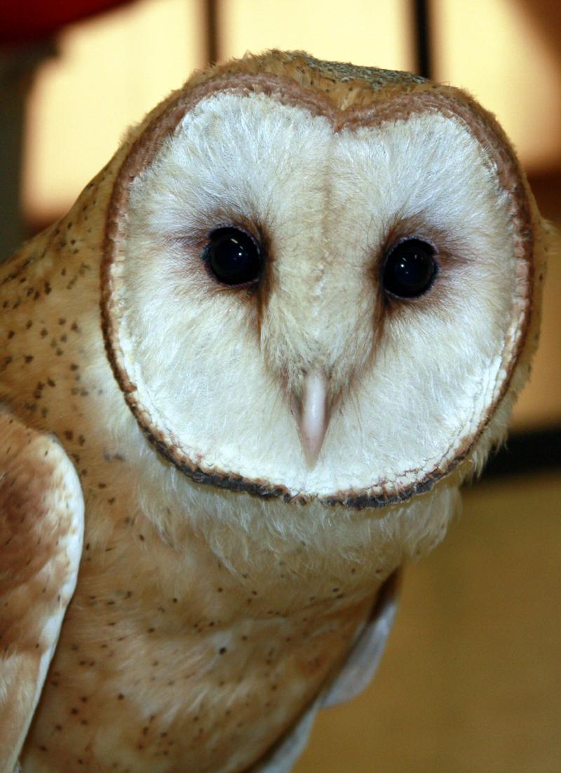 owl020413c