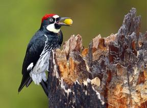Photos courtesy of Placerita Canyon Nature Center Associates