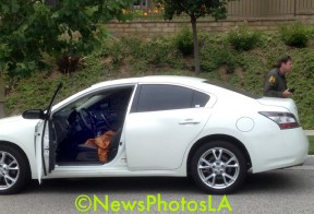 Suspects abandoned this car in Valencia and fled on foot. (News Photos LA)