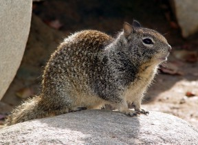 evesquirrel1