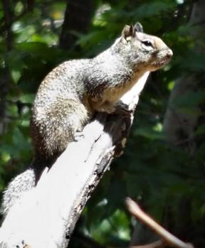 evesquirrel2