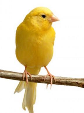 evelyne_bird070213