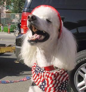 parade-dog