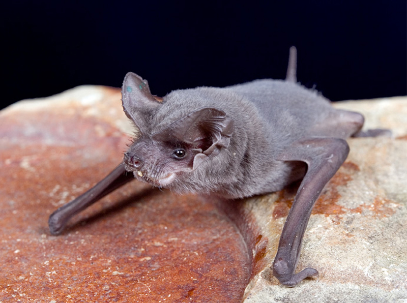 Shaved bat