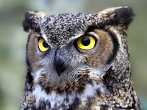 Whoooo you lookin' at?