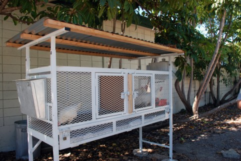 keeping our poultry safe