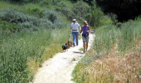 dogsontrailhike