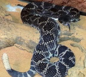 Also not a gopher snake.