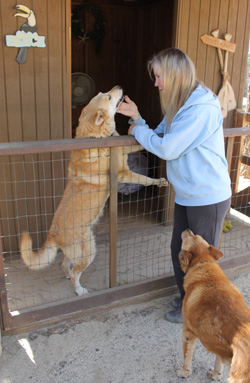 grand-paws-senior-dog-sanctuary-benefit-fundraiser-419373