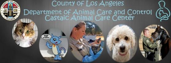 Castaic Animal Shelter pet adoption