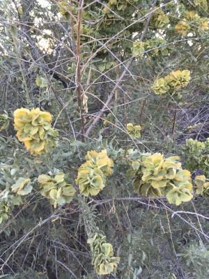 bush in summer