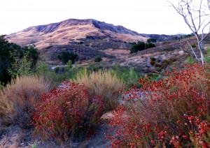 East Walker Ranch Open Space. Photo: Leon Worden