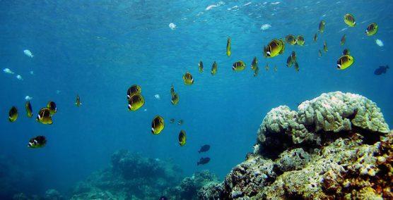 coralreef02