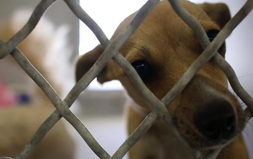 wilk doggie donor bill