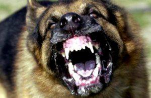 rabiddog_rabies-copy