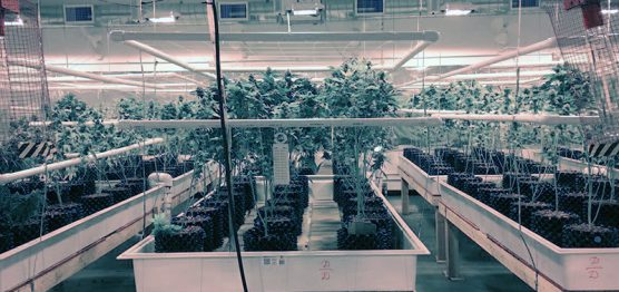 growhouse02