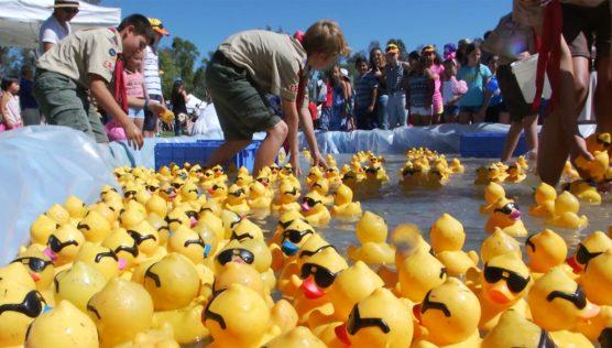 dixon duck dash rubber ducky festival
