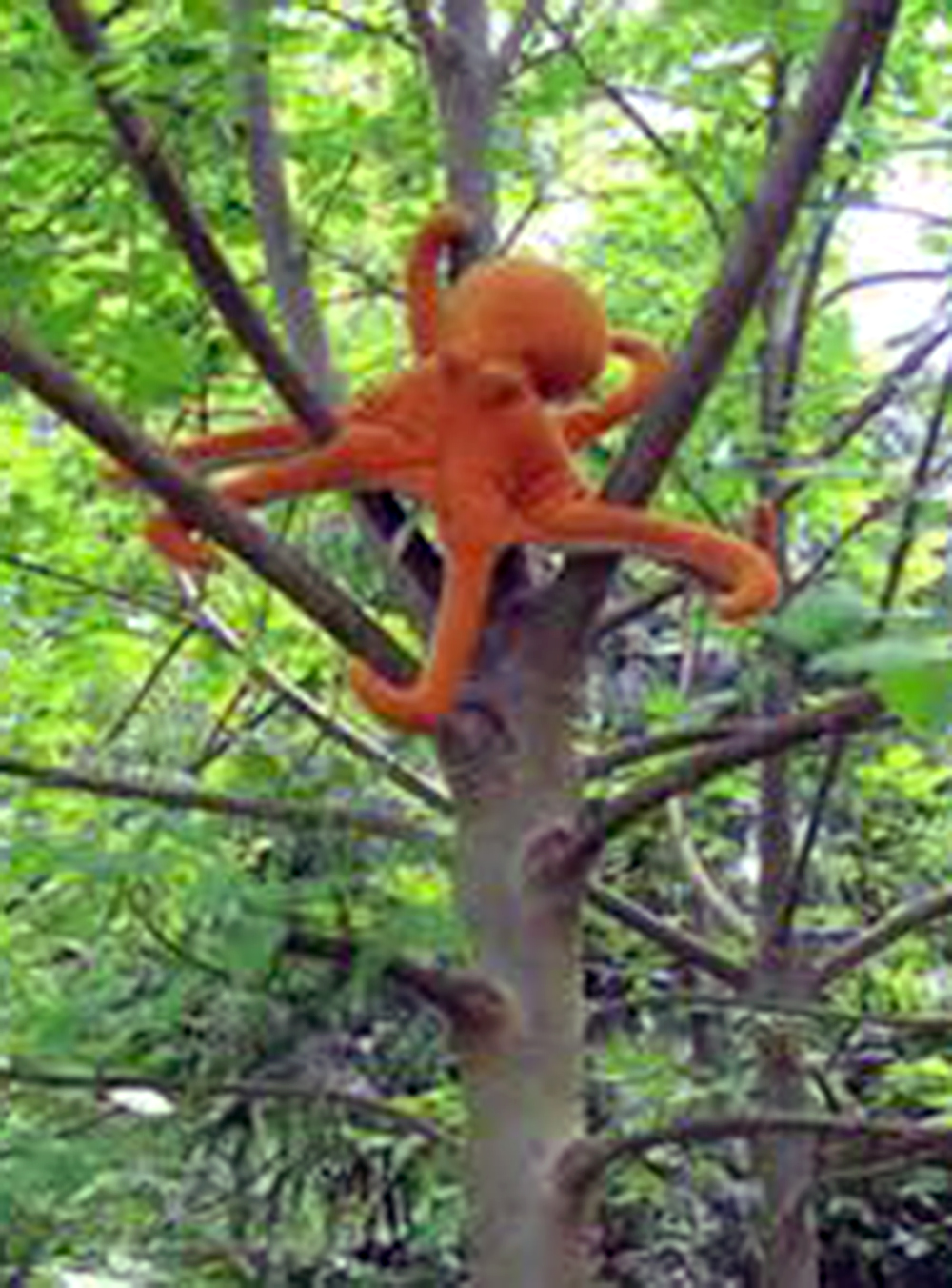 SCVNews.com | Opinion/Commentary: Save the Tree Octopus ...