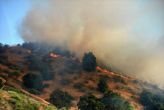Placerita brushfire Mike McClure 1a
