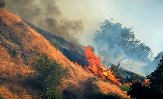 Placerita brushfire Mike McClure 2