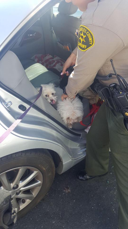 dogs rescued from locked car