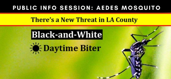 Aedes mosquito info session