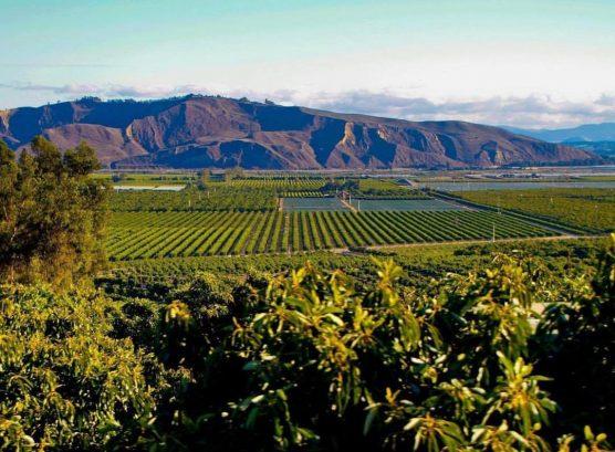 Limoneira field in Ventura County