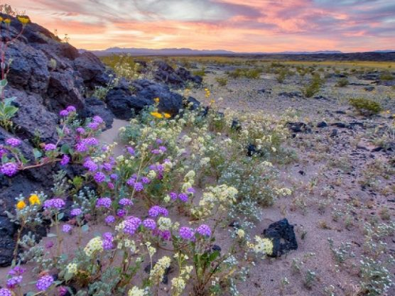 Mojave Trails National Monument. | Photo: Bob Wick/Bureau of Land Management.