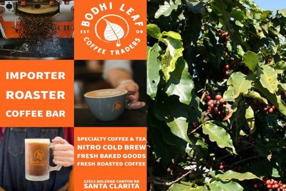 Bodhi Leaf Coffee grand opening
