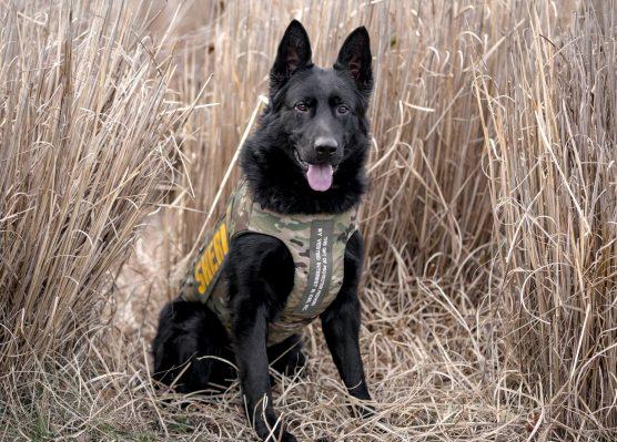 Vested Interest in K9s, Inc. protective vest