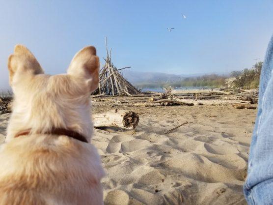 beach alert - Ventura Beach