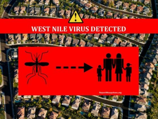 more west nile virus-infected mosquitos