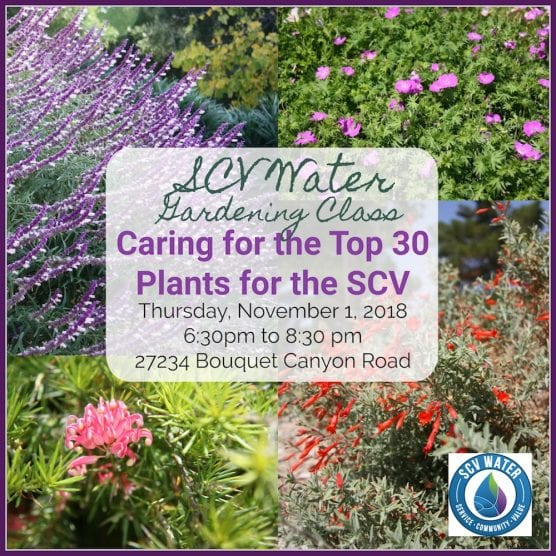 Caring for the Top 20 Plants SCV