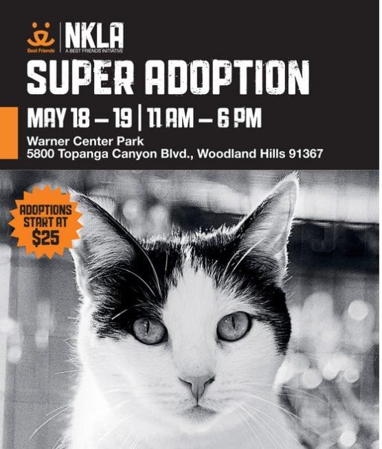 NKLA super adoption spring may save the date flyer