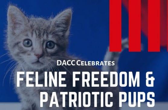 feline freedom patriotic pups