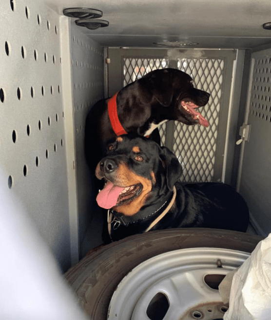 Dogs in Hot Van