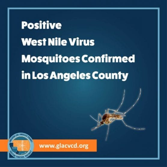 west nile virus infected mosquito samples samples