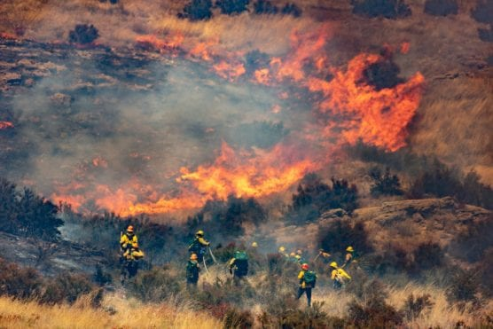 Los Angeles County firefighters and Angeles National Forest firefighters work to douse the Dulce Fire off of the southbound interstate 5 freeway in Agua Dulce Sunday afternoon. | Photo: Cory Rubin/The Signal.