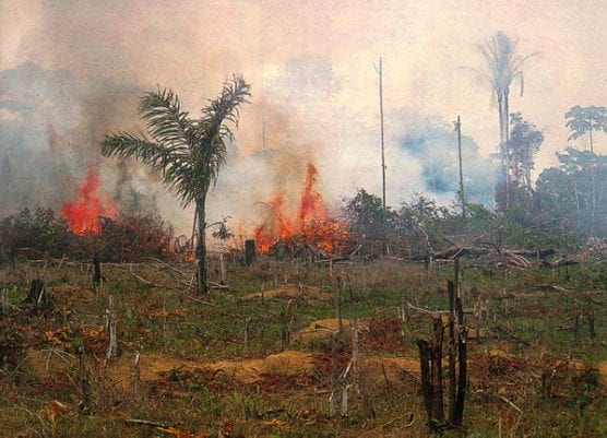 carb brazil rainforest burning nasa