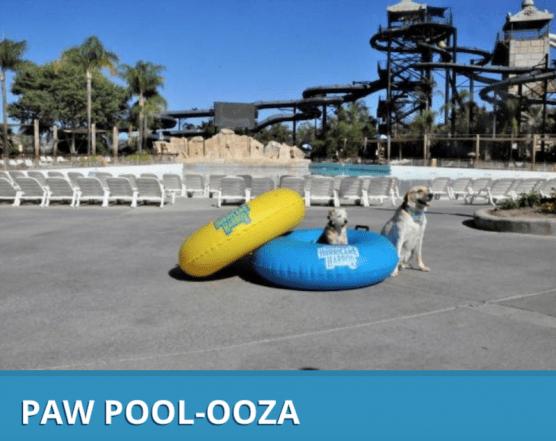 Paw Pool-ooza