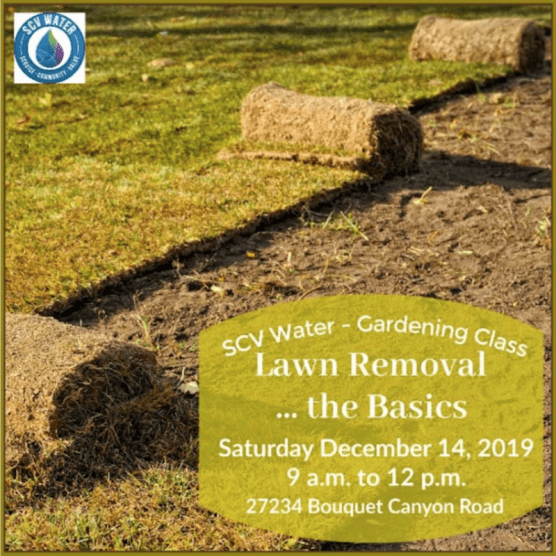 SCV Water Lawn Removal