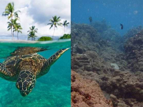 A turtle surfaces offshore of Kahekili Beach Park, Maui, Hawaii.   Photo: Courtesy Don McLeish.