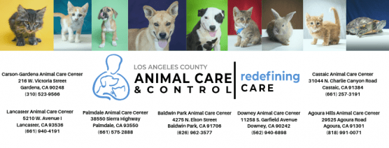 county animal care and control, lost pet awareness day