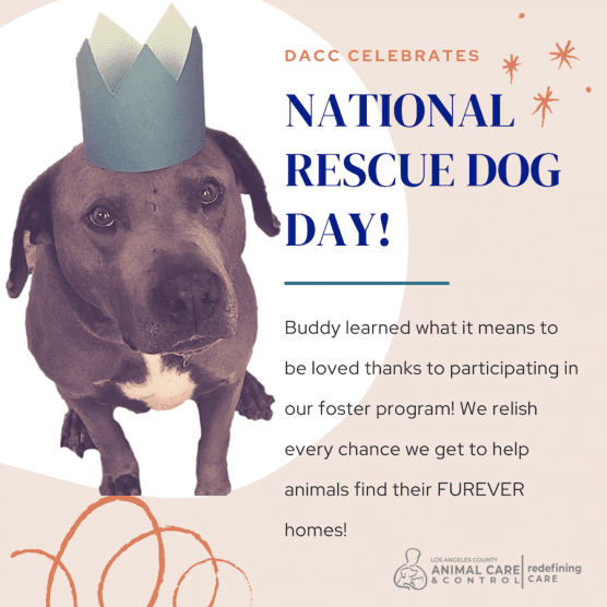 National Dog Rescue Day