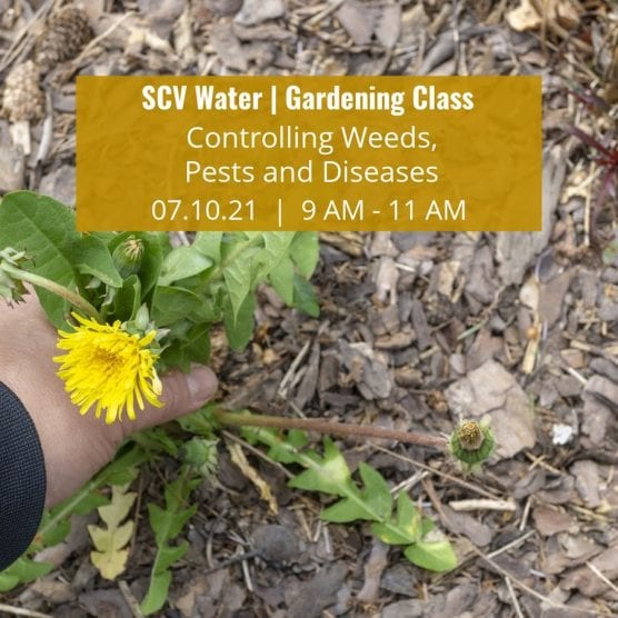 SCV Water Gardening Class