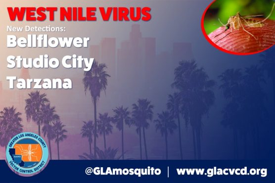 Officials Confirm Positive West Nile Virus Mosquito Samples in LA County